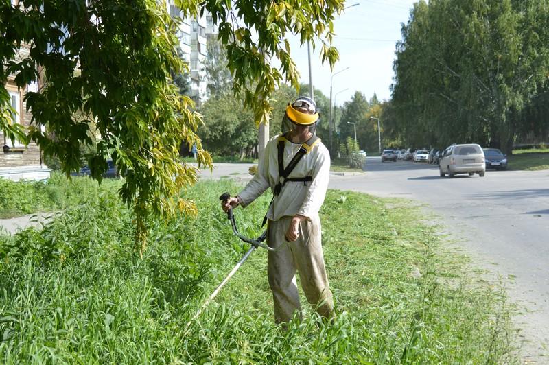 Газоны вдоль дорог будут приведены в порядок